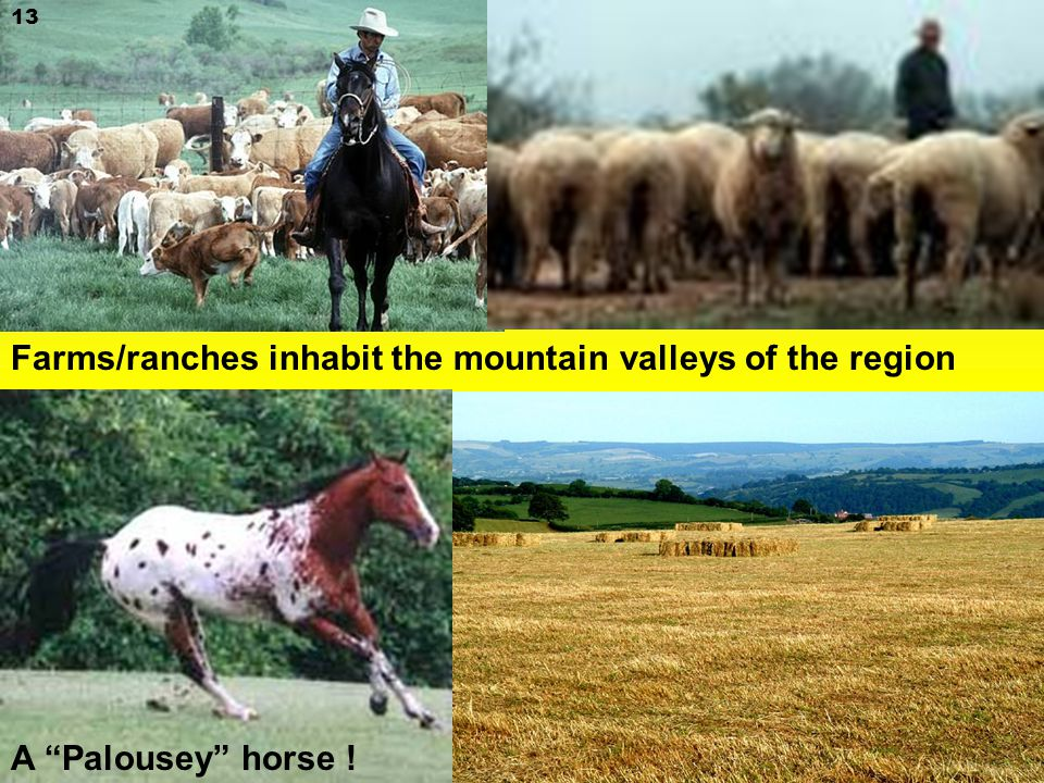 13 Farms/ranches inhabit the mountain valleys of the region A Palousey horse !