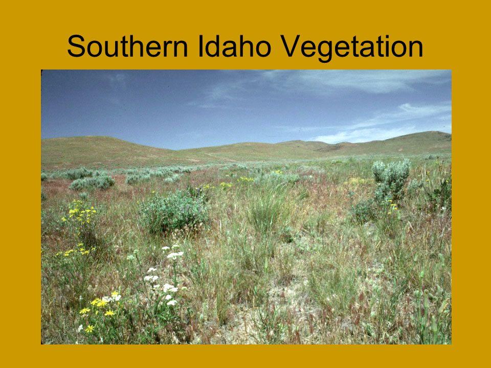 Southern Idaho Vegetation