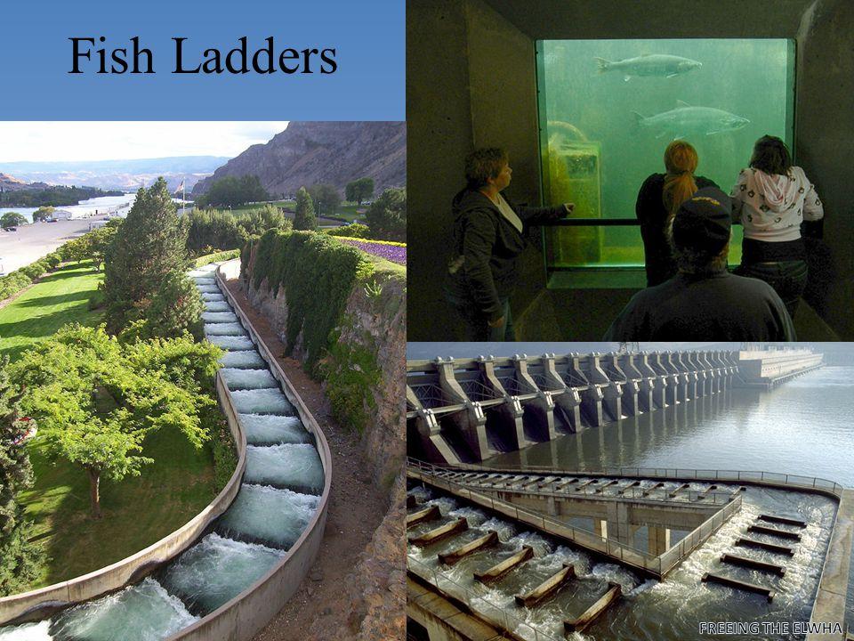 Fish Ladders