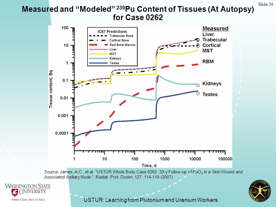 Slide 38 USTUR: Learning from Plutonium and Uranium Workers Measured and Modeled 239 Pu Content of Tissues (At Autopsy) for Case 0262 Source: James, A.C., et al.