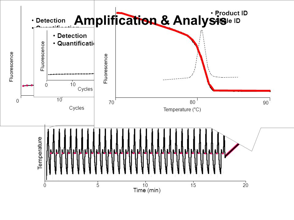 Fluorescence Cycles Detection Quantification 0 30 2010 Detection Quantification Fluorescence Cycles Detection Quantification 0 30 2010 Amplification T