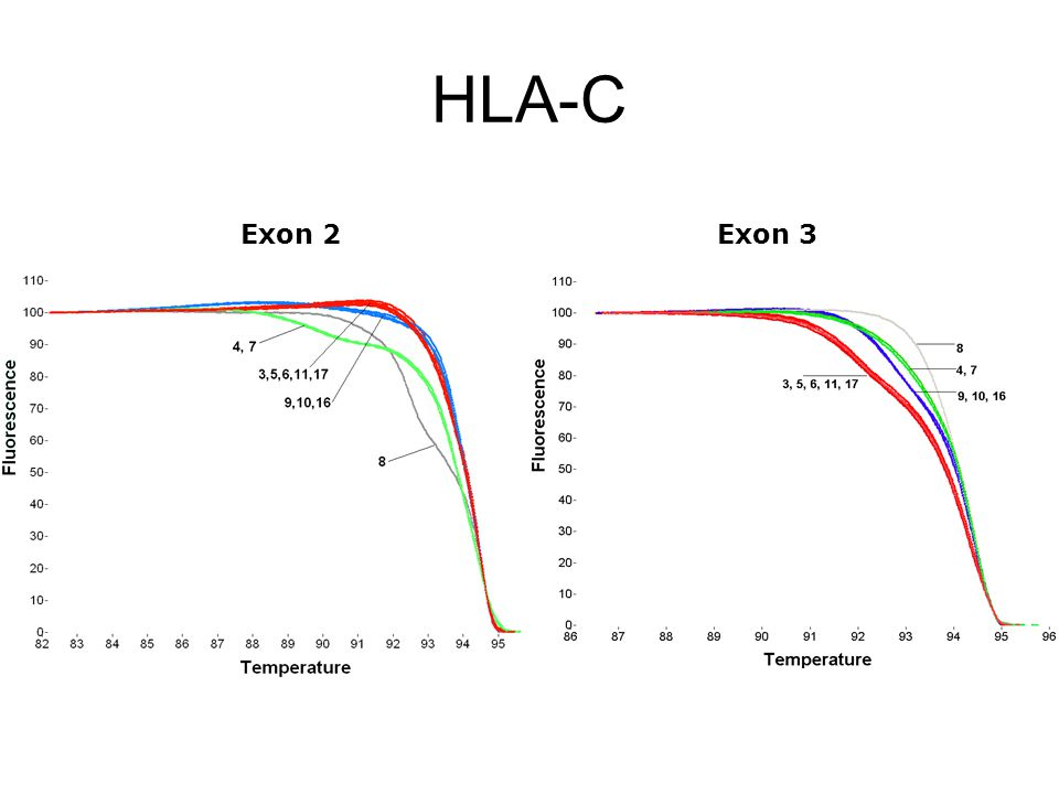 HLA-C Exon 2Exon 3