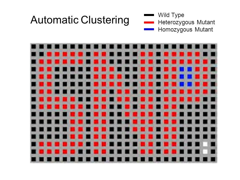 Automatic Clustering Wild Type Heterozygous Mutant Homozygous Mutant