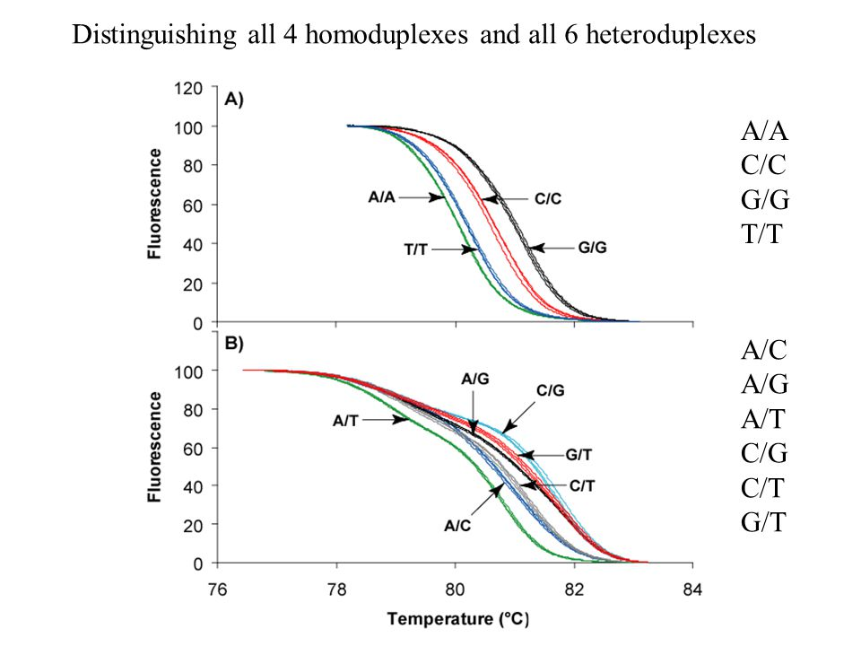 Distinguishing all 4 homoduplexes and all 6 heteroduplexes A/A C/C G/G T/T A/C A/G A/T C/G C/T G/T