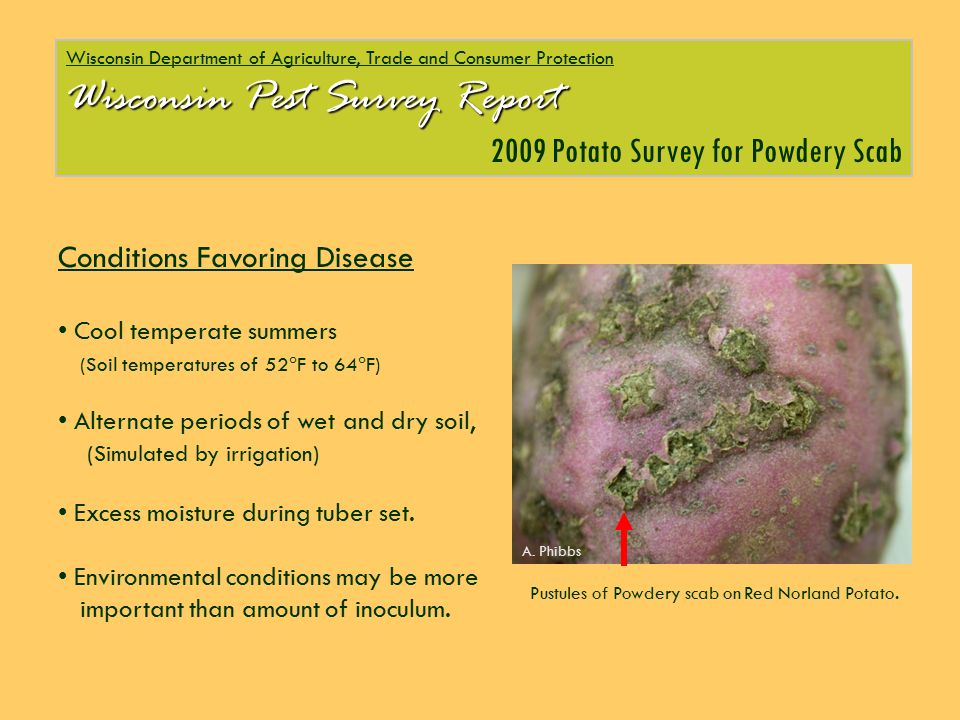 Wisconsin Department of Agriculture, Trade and Consumer Protection Wisconsin Pest Survey Report 2009 Potato Survey for Powdery Scab Conditions Favorin