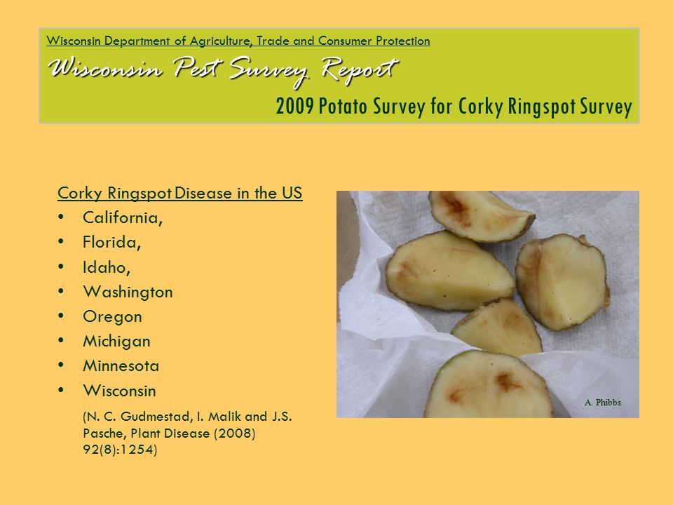 Wisconsin Department of Agriculture, Trade and Consumer Protection Wisconsin Pest Survey Report 2009 Potato Survey for Corky Ringspot Survey Corky Rin