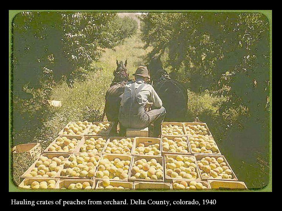 Distributing surplus commodities. St. Johns, Arizona, 1940