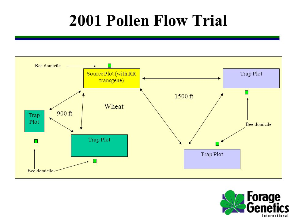2001 Pollen Flow Trial Source Plot (with RR transgene) Trap Plot 900 ft 1500 ft Bee domicile Wheat