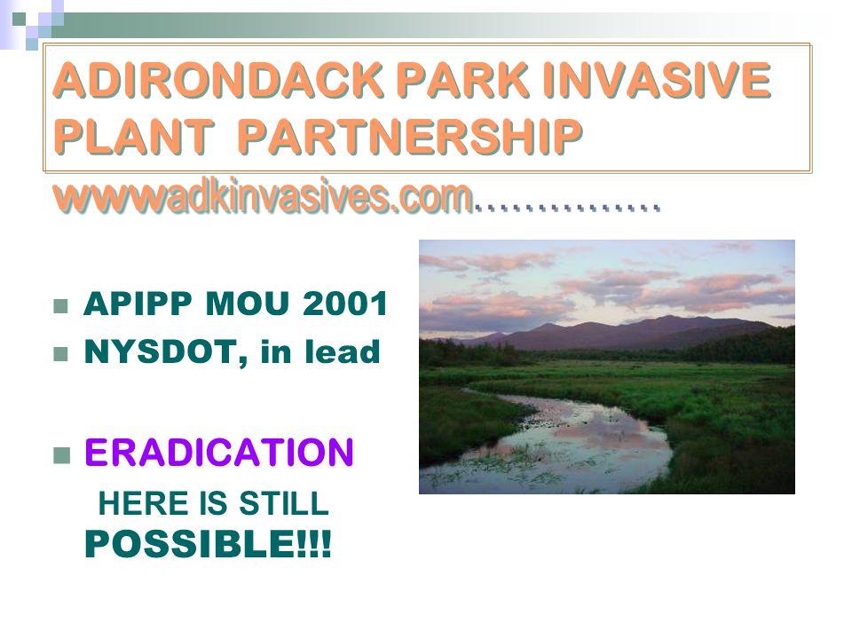 www adkinvasives.com ADIRONDACK PARK INVASIVE PLANT PARTNERSHIP www adkinvasives.com…………… APIPP MOU 2001 NYSDOT, in lead ERADICATION HERE IS STILL POS