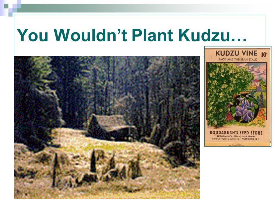 You Wouldn't Plant Kudzu…