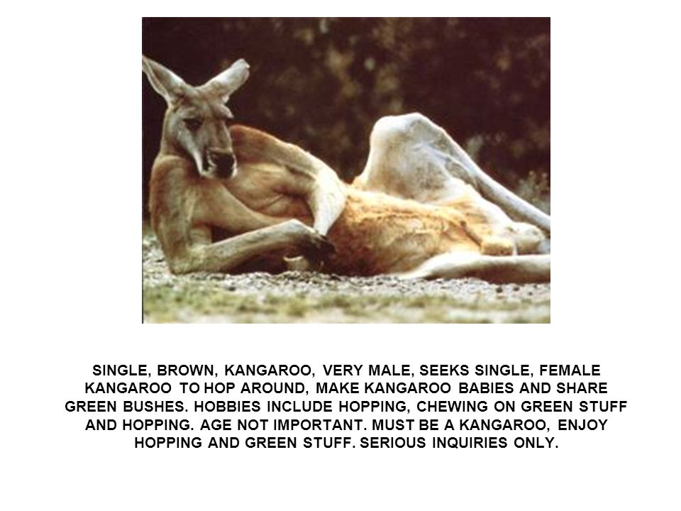 SINGLE, BROWN, KANGAROO, VERY MALE, SEEKS SINGLE, FEMALE KANGAROO TO HOP AROUND, MAKE KANGAROO BABIES AND SHARE GREEN BUSHES.