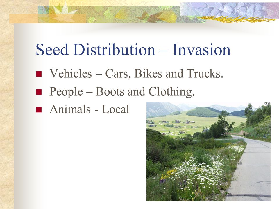 Seed Distribution – Invasion Vehicles – Cars, Bikes and Trucks.