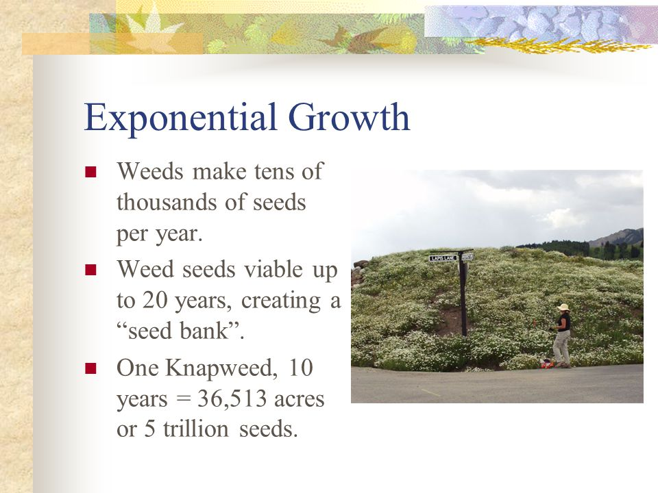 Exponential Growth Weeds make tens of thousands of seeds per year.