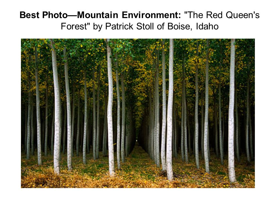 Best Photo—Mountain Environment: The Red Queen s Forest by Patrick Stoll of Boise, Idaho