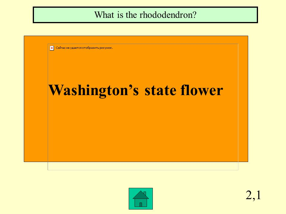 2,1 Washington's state flower What is the rhododendron?