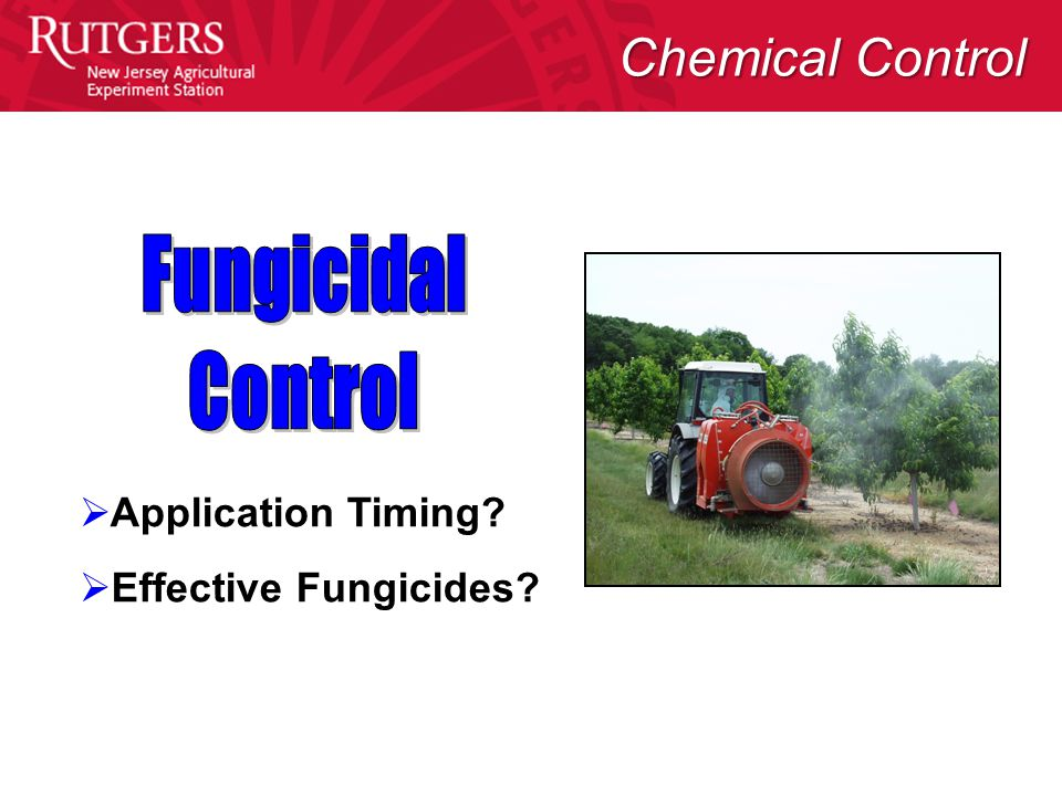  Application Timing  Effective Fungicides Chemical Control