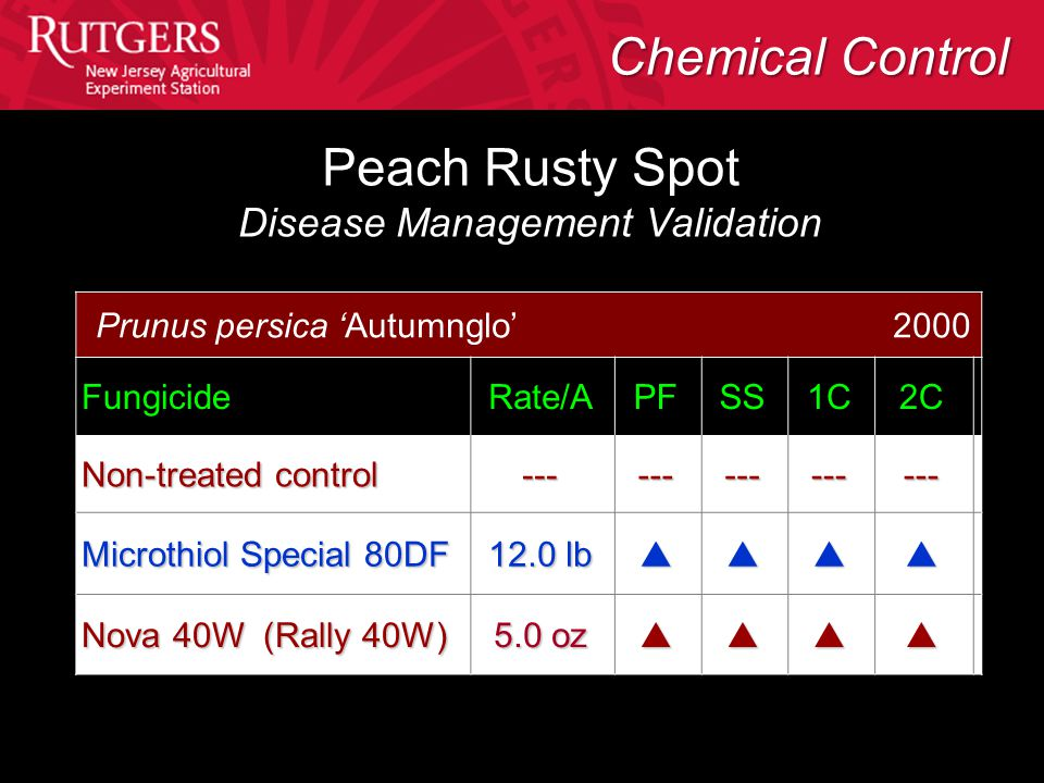 Peach Rusty Spot Disease Management Validation Prunus persica 'Autumnglo' 2000 FungicideRate/APFSS1C2C Non-treated control --------------- Microthiol Special 80DF 12.0 lb  Nova 40W (Rally 40W) 5.0 oz  Chemical Control