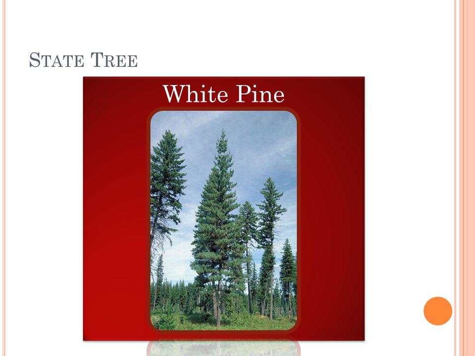 S TATE T REE White Pine