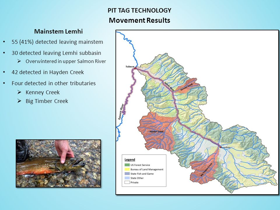 PIT TAG TECHNOLOGY 55 (41%) detected leaving mainstem 30 detected leaving Lemhi subbasin  Overwintered in upper Salmon River 42 detected in Hayden Creek Four detected in other tributaries  Kenney Creek  Big Timber Creek Movement Results Mainstem Lemhi
