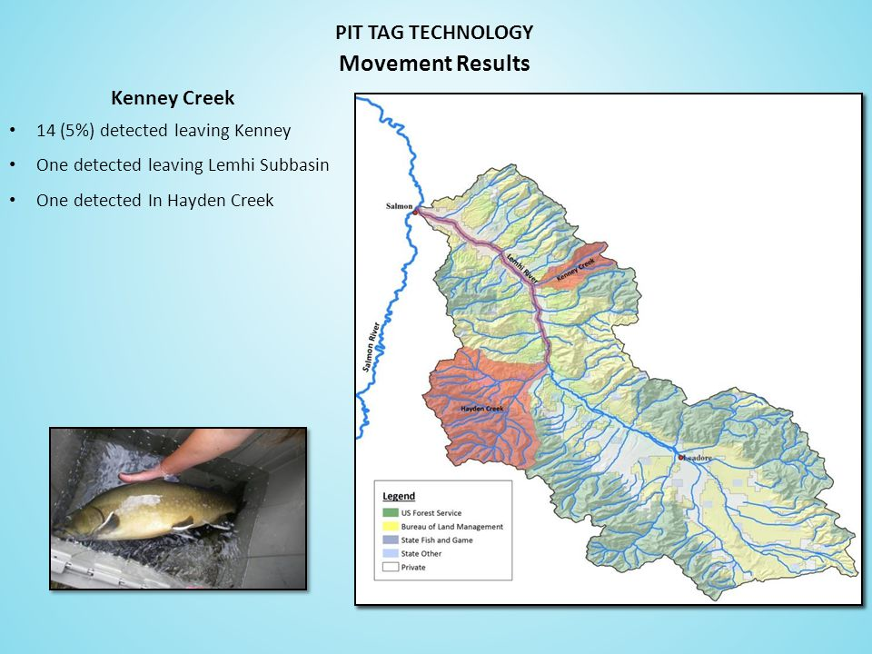 Kenney Creek PIT TAG TECHNOLOGY 14 (5%) detected leaving Kenney One detected leaving Lemhi Subbasin One detected In Hayden Creek Movement Results