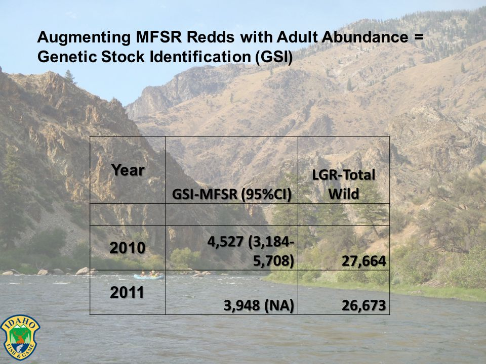 Augmenting MFSR Redds with Adult Abundance = Genetic Stock Identification (GSI)Year GSI-MFSR (95%CI) LGR-Total Wild 2010 4,527 (3,184- 5,708) 27,664 2011 3,948 (NA) 3,948 (NA)26,673