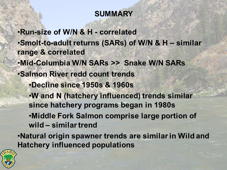 SUMMARY Run-size of W/N & H - correlated Smolt-to-adult returns (SARs) of W/N & H – similar range & correlated Mid-Columbia W/N SARs >> Snake W/N SARs Salmon River redd count trends Decline since 1950s & 1960s W and N (hatchery influenced) trends similar since hatchery programs began in 1980s Middle Fork Salmon comprise large portion of wild – similar trend Natural origin spawner trends are similar in Wild and Hatchery influenced populations