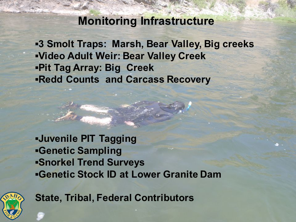 Monitoring Infrastructure ▪3 Smolt Traps: Marsh, Bear Valley, Big creeks ▪Video Adult Weir: Bear Valley Creek ▪Pit Tag Array: Big Creek ▪Redd Counts and Carcass Recovery ▪Juvenile PIT Tagging ▪Genetic Sampling ▪Snorkel Trend Surveys ▪Genetic Stock ID at Lower Granite Dam State, Tribal, Federal Contributors
