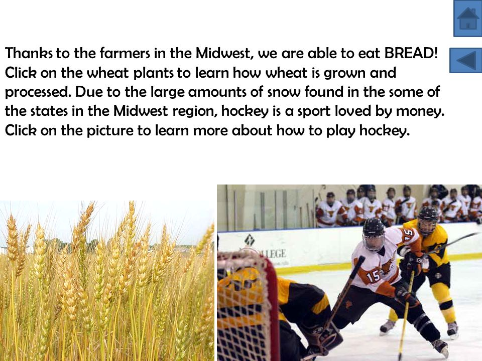 Thanks to the farmers in the Midwest, we are able to eat BREAD! Click on the wheat plants to learn how wheat is grown and processed. Due to the large