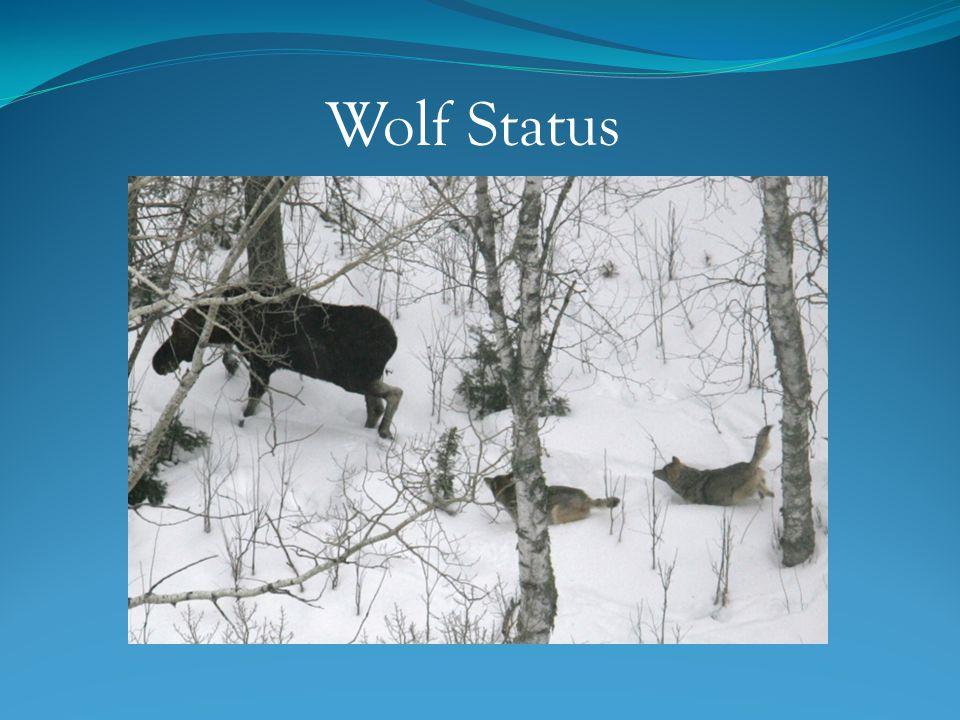 Wolf Status