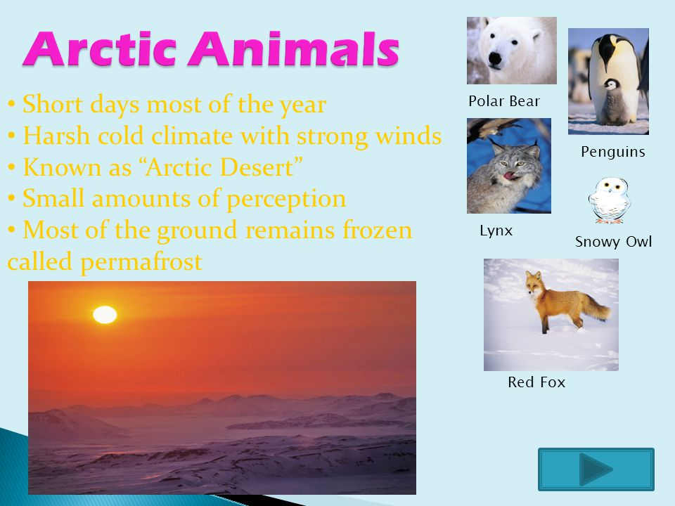 Polar Bear Lynx Red Fox Snowy Owl Penguins Short days most of the year Harsh cold climate with strong winds Known as Arctic Desert Small amounts of perception Most of the ground remains frozen called permafrost