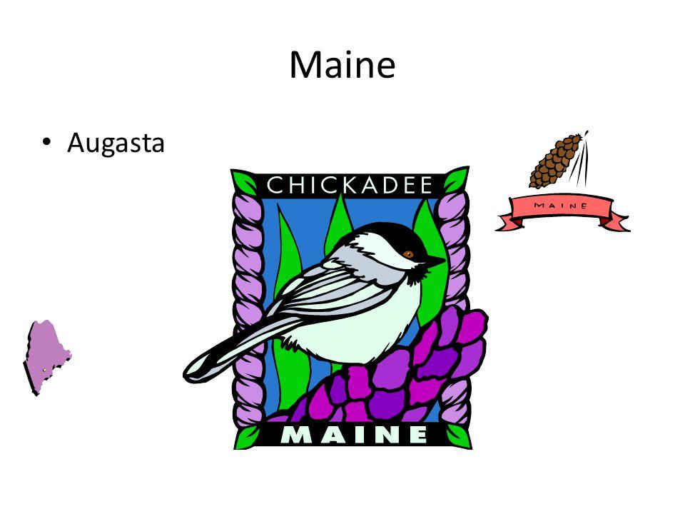 Maine Augasta