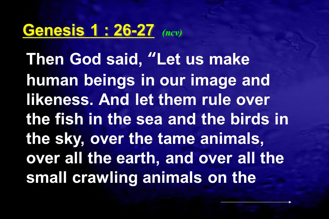 """Then God said, """"Let us make human beings in our image and likeness. And let them rule over the fish in the sea and the birds in the sky, over the tame"""