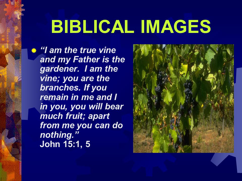 BIBLICAL IMAGES  I am the true vine and my Father is the gardener.