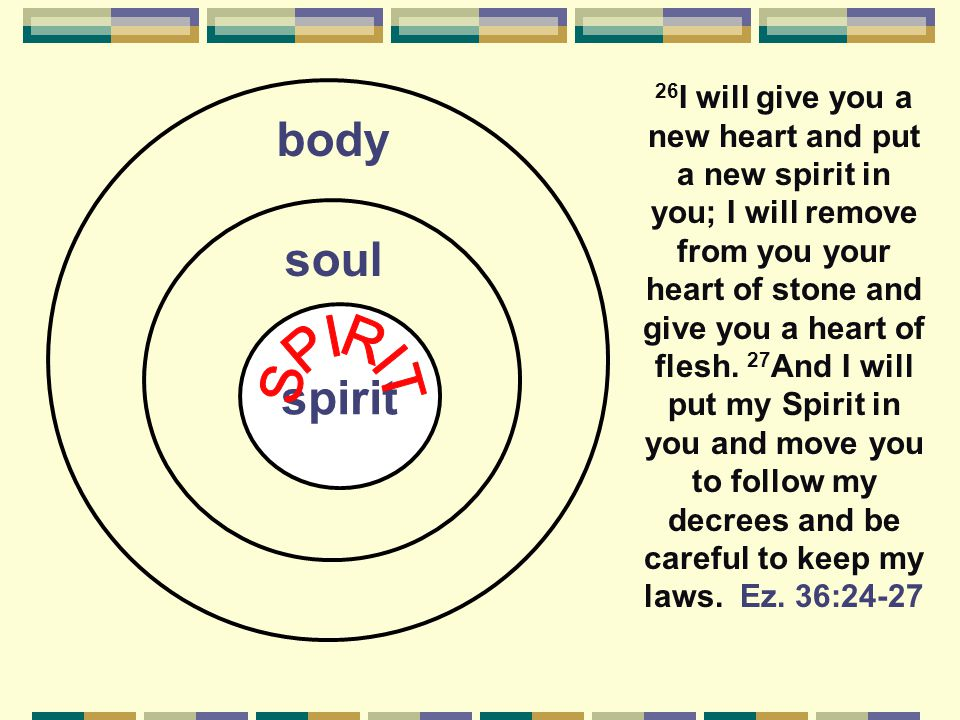 spirit body soul 26 I will give you a new heart and put a new spirit in you; I will remove from you your heart of stone and give you a heart of flesh.