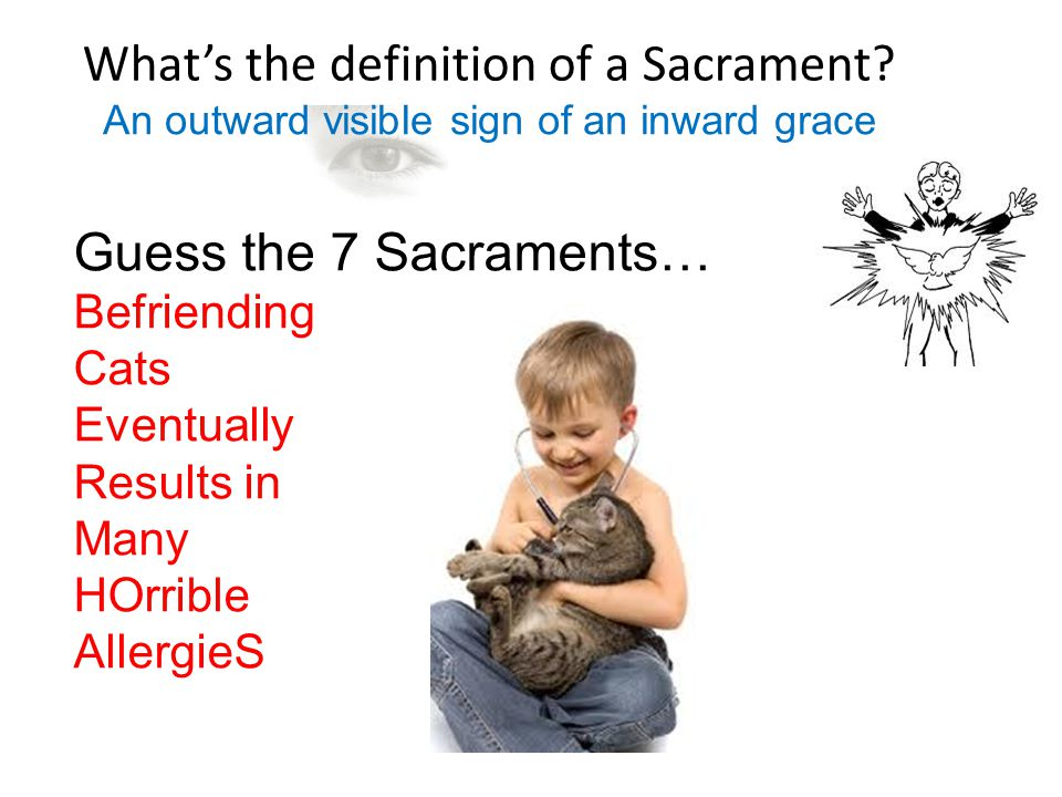 What's the definition of a Sacrament? Guess the 7 Sacraments… Befriending Cats Eventually Results in Many HOrrible AllergieS An outward visible sign o