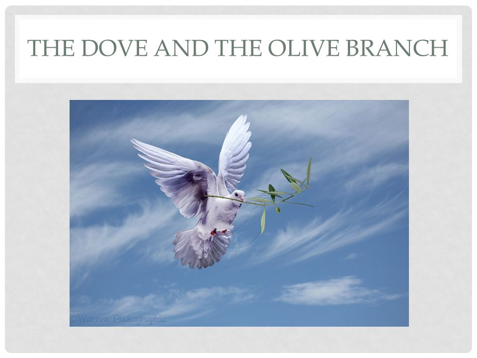 THREE STAGES The dove finds nowhere to land The dove finds buds of new life The dove finds a flourishing place to dwell/ land/rest