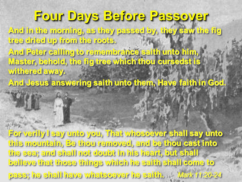 Four Days Before Passover And in the morning, as they passed by, they saw the fig tree dried up from the roots.