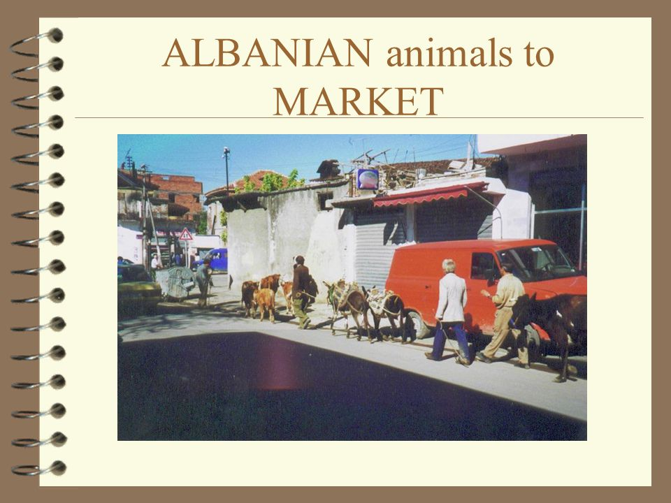 ALBANIAN shepherd in TIRANA