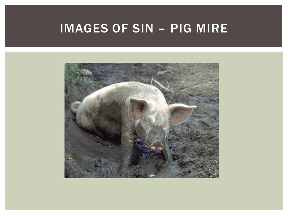 IMAGES OF SIN – PIG MIRE