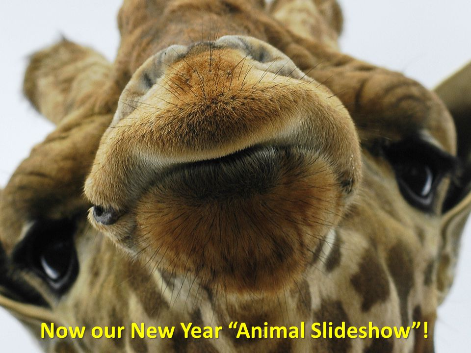 Now our New Year Animal Slideshow !