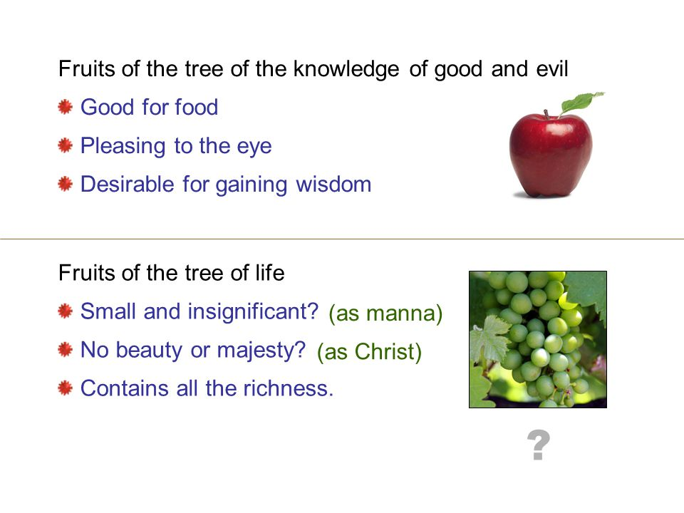Fruits of the tree of life Small and insignificant.