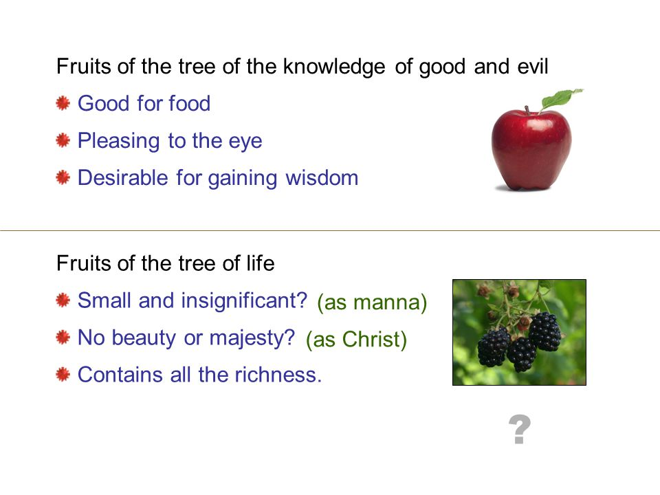 Fruits of the tree of the knowledge of good and evil Good for food Pleasing to the eye Desirable for gaining wisdom Fruits of the tree of life Small and insignificant.