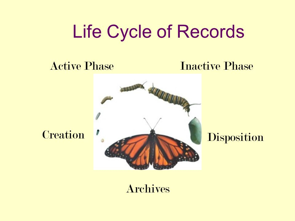 Life Cycle of Records Creation Active PhaseInactive Phase Disposition Archives