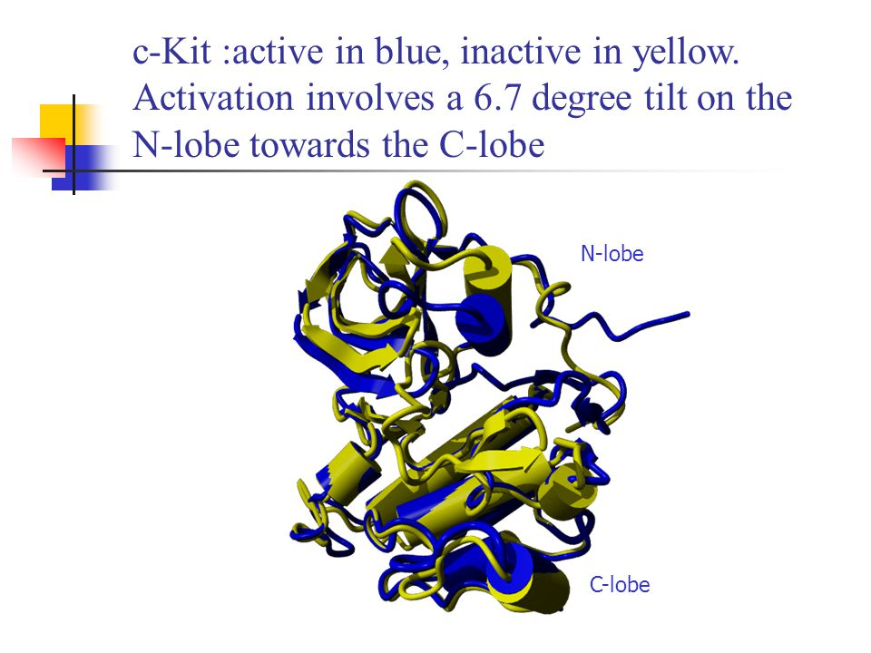 c-Kit : key structural components