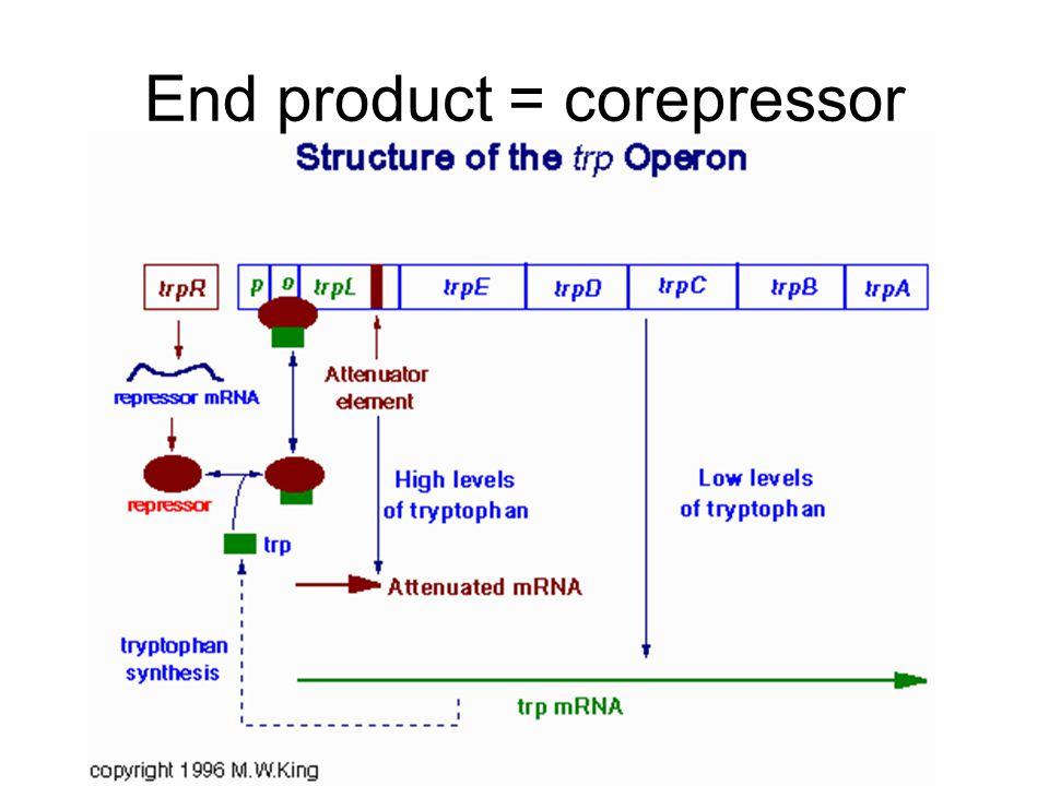 End product = corepressor