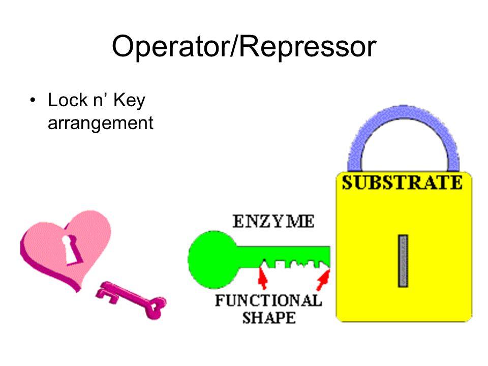 Operator/Repressor Lock n' Key arrangement