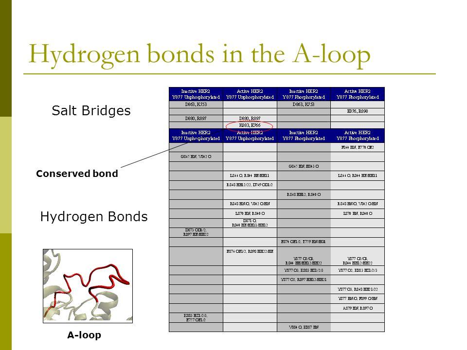 Hydrogen bonds in the αC helix Salt Bridges Hydrogen Bonds Key salt bridge αC helix