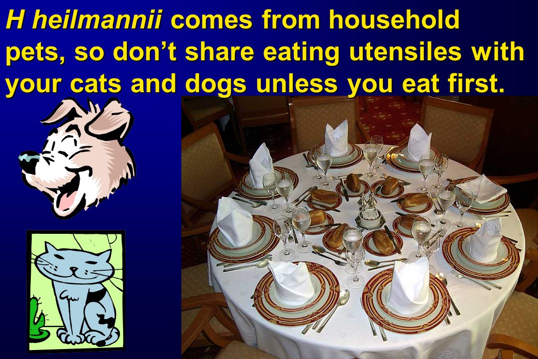 H heilmannii comes from household pets, so don't share eating utensiles with your cats and dogs unless you eat first.