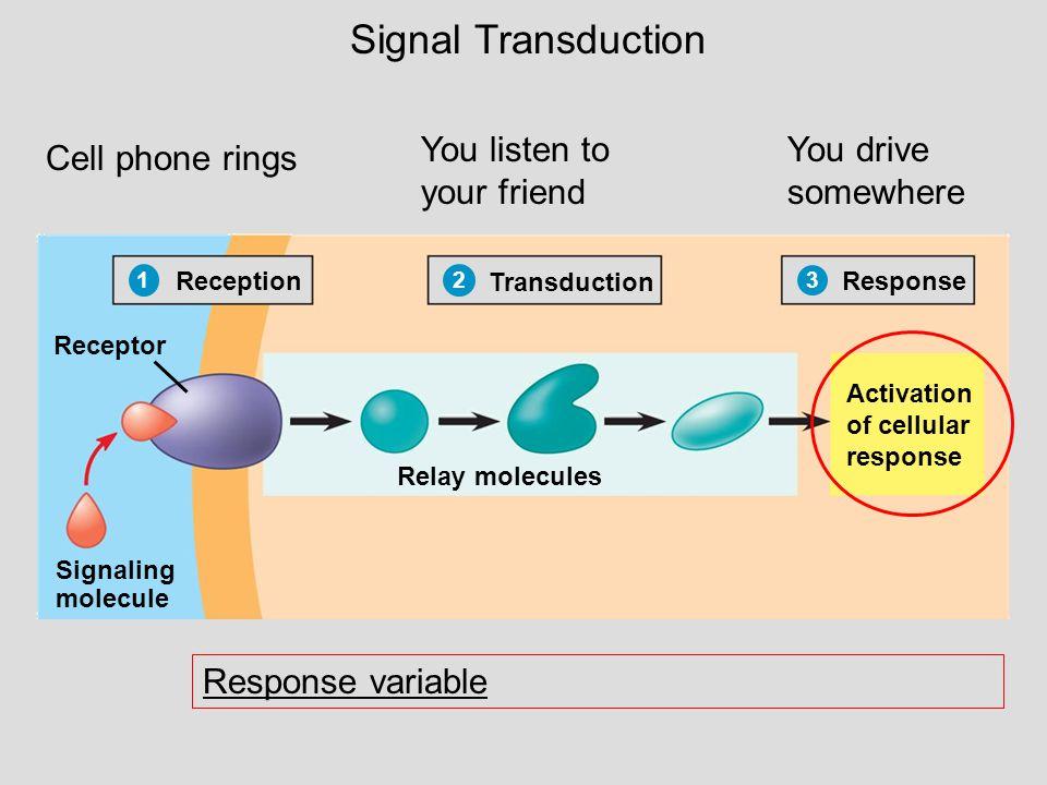 Sending the Signal