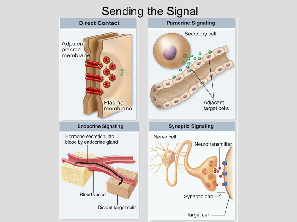 Reception – receptors for hydrophilic molecules Signal called a ligand